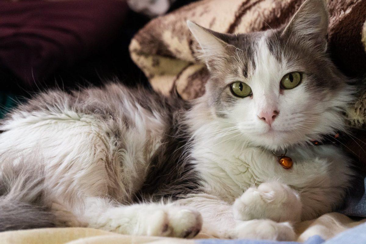 ¿Por qué se celebra el 4 de octubre? Día Mundial de los Animales