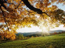 anhelos, paisaje hd, naturaleza, arbol