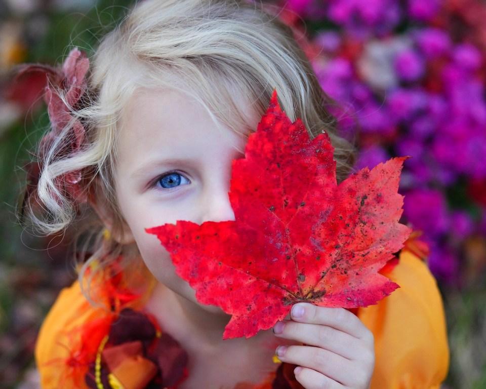 activités d'automne