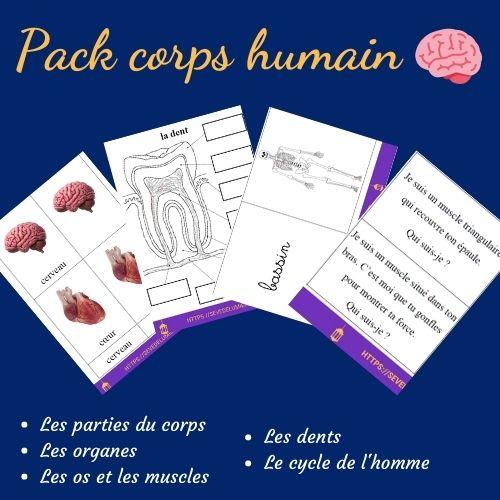 activités montessori corps humain