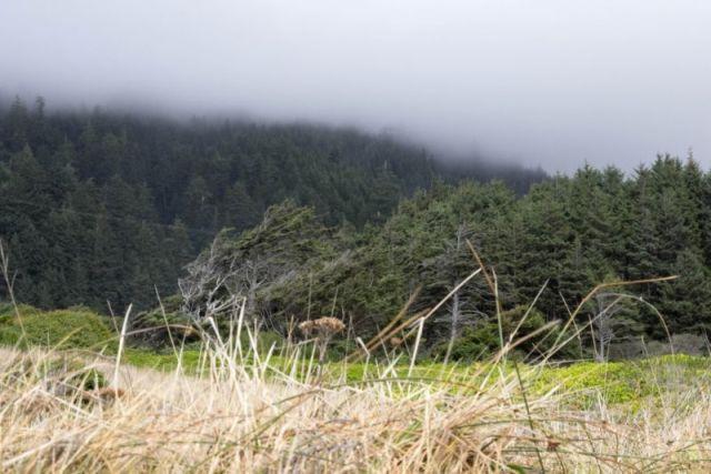 Орегон. Мыс Перпетуа. Лес в туманной дымке