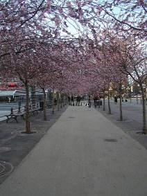 Sztokholm - P4110103