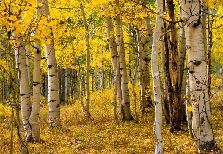 wood landscape sun yellow