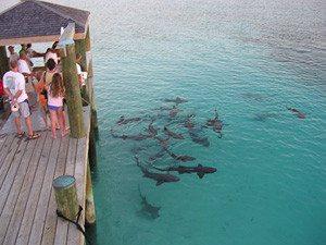 Nassau Staniel Cay Exumas Bahamas Seven Seas Yacht