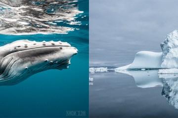 banner karim iliya whale and iceberg