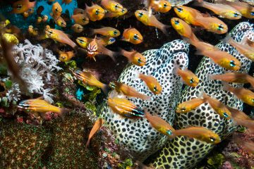 marine biodiversity with eels and fish Vamizi Island, a Cradle of Coral coral reef
