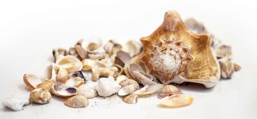 Shells as Religions and Spiritual Objects in Hinduism and Buddhism