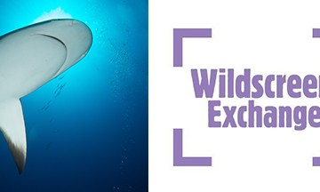 wildscreen exchange conservation photography photographs
