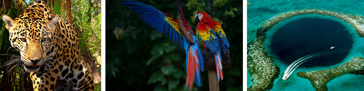 nature and wildlife you can find in belize