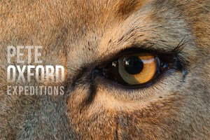 pete oxford, vacation, tours, ecotourism, sustainable travel, lion travel africa