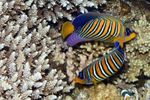 fish under the sea in egypt
