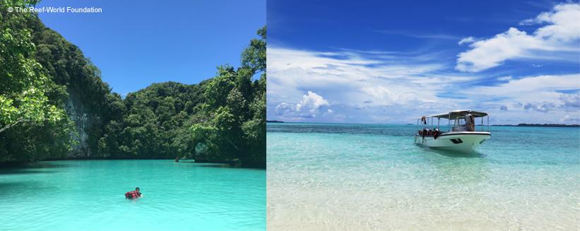 Green Fins beach collage