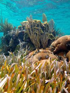 seagrass in cuba