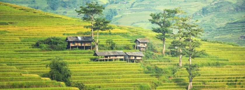 rice terraces in cambodia