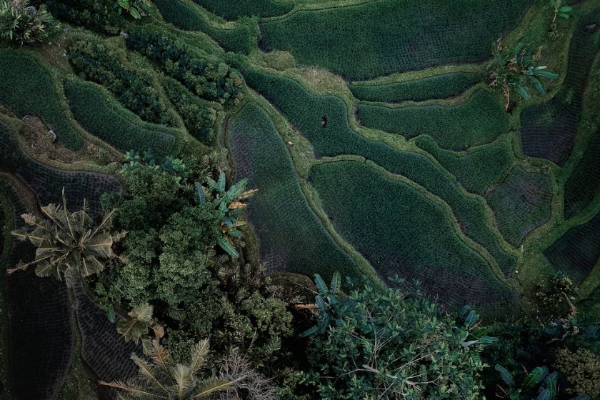 areal view of a rice patty in bali