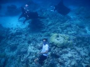 Manta Rays in Suwarrow - Cook Islands