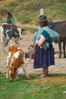 Calf and owner, Otavalo
