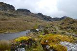 Lichen, Cajas National Park, Ecuador