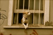 Dog watch, Valparaiso, Chile.