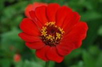 Flower, Coroico