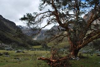 Forest walk on the way to a glacier lake, Santa Cruz trek, Cordillera Blanca, Peru