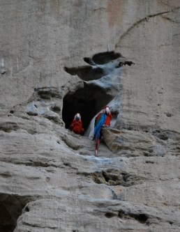 Nesting macaws, Bolivian jungle