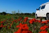 Spring flowers, Uruguay