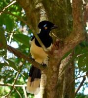 Jungle bird, Iguazu Falls (Brazil)