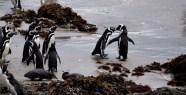 Get a room! Penguin colony at Parque Ahuenco, Chiloé