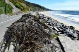 Roadside seaweed