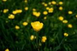 Spring flowers, Argentina
