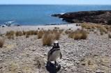 Hello Mr Penguin