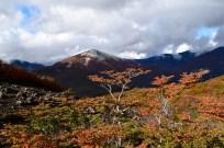 Autumn colours, Argentinian lakes district