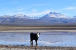 Laguna Blanca, Mendoza province, Argentina.