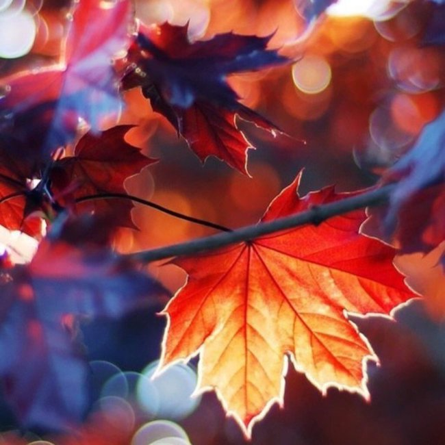 severelymagicalthings/magical-fall-glow/