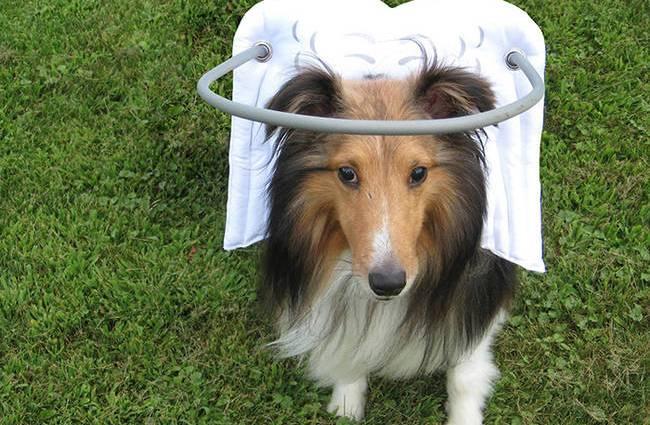Görme Engelli Köpekler İçin Müthiş Buluş! köpekleri görenler önce şaşırıyor, ancak gördüklerinin ne olduğunu öğrenince köpekler için olan bu dahiyane buluşa hayran kalıyorlar. http://sevgilikopegim.com/2014/11/24/gorme-engelli-kopekler-icin-muthis-bulus/