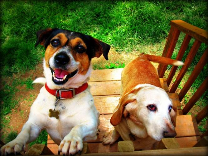 Marketlerde, pet-shoplarda birbirinden farklı sayısız tasma çeşidi var. Tasma seçerken çok dikkatli davranmak gerekir. Köpeğiniz beden yapısına ve aktivitelerine uygun olmayan tasma takmak, fiziksel ve psikolojik sağlık sorunlarına davetiye çıkarmaktır. http://sevgilikopegim.com/2014/11/20/dogru-tasma-nasil-secilir/