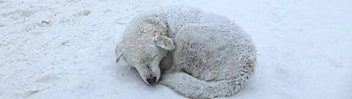 Kars'ta Köpeklerin Donarak Ölmesine Karşıyız İmzalarsan Ölmezsin! İmzalamazsan Donarak Ö-L-E-C-E-K-L-E-R! http://sevgilikopegim.com/2015/02/05/karsta-kopeklerin-donarak-olmesine-karsiyiz/