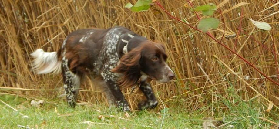 Köpeğinize İsim Seçerken Bunlara Dikkat Edin! http://sevgilikopegim.com/2015/05/25/kopeginize-isim-secerken-bunlara-dikkat-edin/