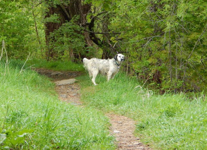 Köpeğiniz İsmi Söylendiğinde Ne Yapması Gerektiğini Biliyor mu?http://sevgilikopegim.com/2015/05/25/kopeginiz-ismi-soylendiginde-ne-yapmasi-gerektigini-biliyor-mu/