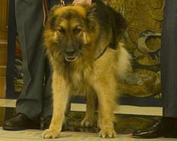 El perro Ajax