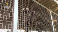 Un sevillano está siendo investigado por traficar con monos Tití