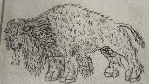 El dibujo del cíbolo (bisonte)