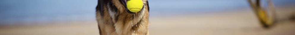 Perros-en-la-playa-7