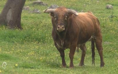 La ganadería de Aguadulce, Roca Rey y Andrés Romero, en RAZA