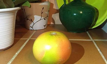 Grapefruit from Ave Maria Farm, Seville