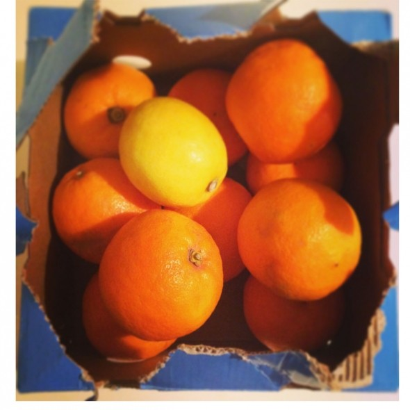 The 10 Golden Rules for Marmalade making, by Suzannah Butcher