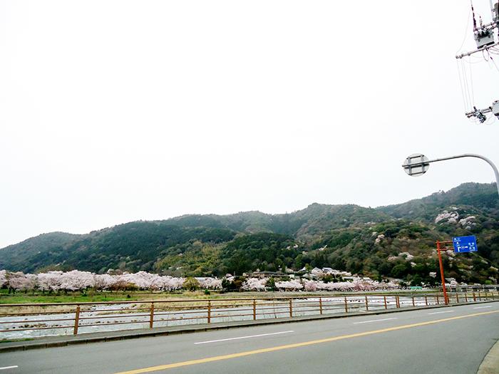 Natureza em Arashiyama, Kyoto, Japão