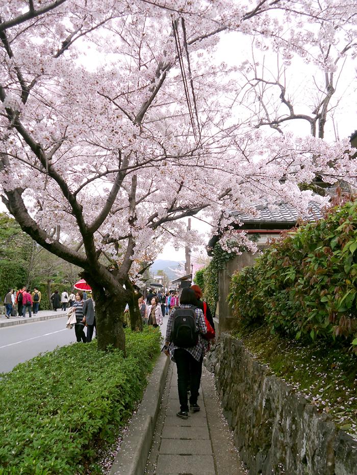 ruas de arashiyama floridas de sakura