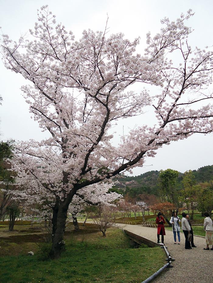 Jardim do solo sagrado em Kyoto, Japão
